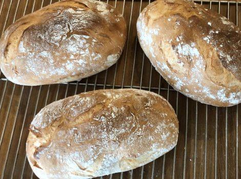 לחם בסיסי ירוק