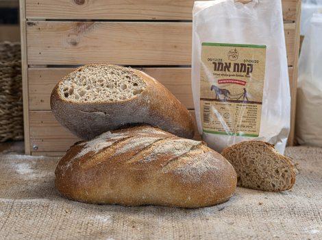 לחם מחמצת קוראסאן/אמר
